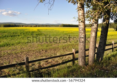 Wildlife Refuge and Historic Farm with Canola Plants in Bloom - stock photo