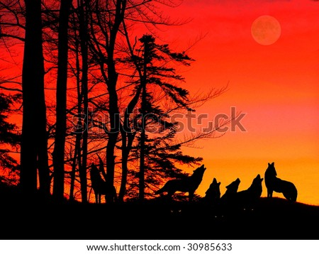 Wildness howl - stock photo