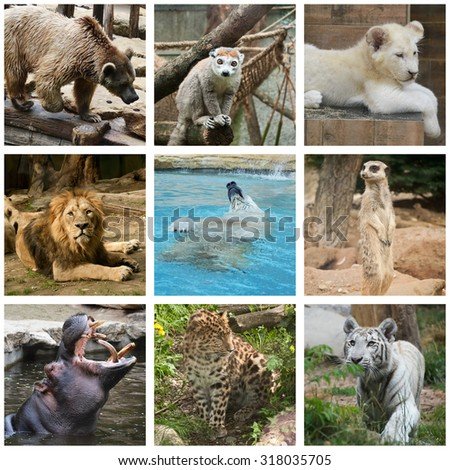 wilflife animals collage - stock photo