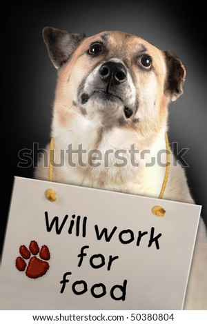Will work for Food - stock photo