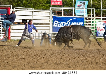 WILLITS, CA - JULY 4: Bull prevail over participant at the Willits Frontier Days, California's oldest continuous rodeo, held July 4, 2011 in Willits, CA. - stock photo