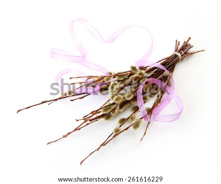 Willow branch - stock photo
