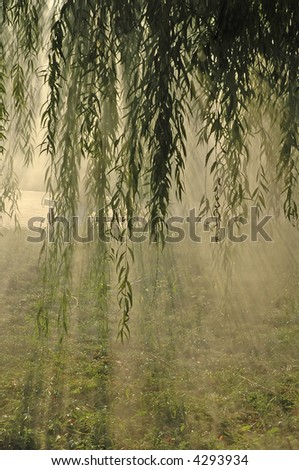 Willow branches in morning haze - stock photo