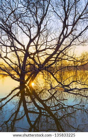Willow flooded with spring freshet against sunrise - stock photo