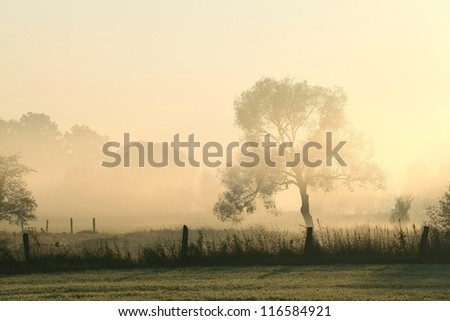 Willow in the meadow on a misty autumn morning. - stock photo