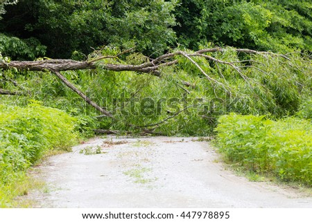 Willow tree blown down across the road by a storm - stock photo