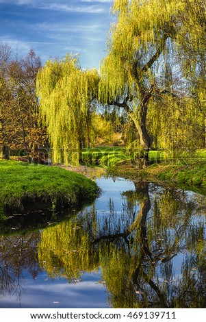 Willow tree by the Pond with the mirroring on the surface