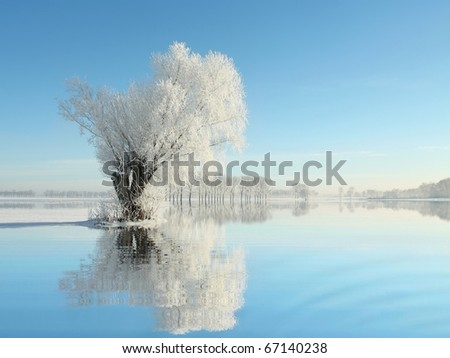 Willow tree covered with frost against a blue sky on a sunny winter morning. - stock photo
