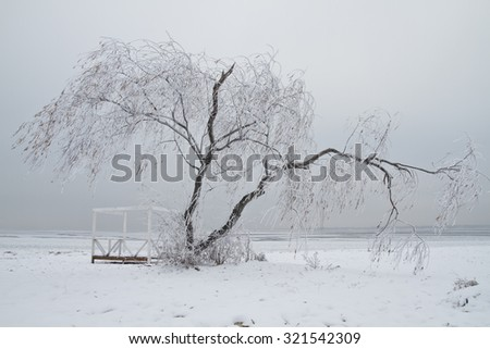 Willow tree covered with icicles in winter - stock photo