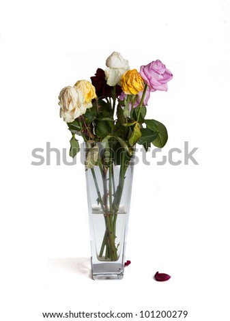 Wilted dying mixed roses in vase - stock photo