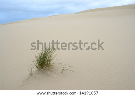 Wind blown grass on sand dune.