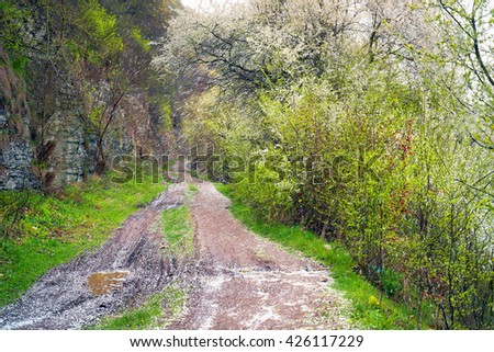 Wind carries the petals of cherry, plum, cherry, plum - covering the white dirt road along the rocky shore. The aroma in the air on a background of fresh herbs and shrubs travÃ?? symbolizes spring - stock photo