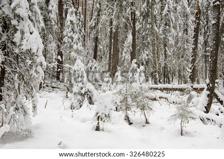 wind-fallen trees deep in taiga covered by the first snow.