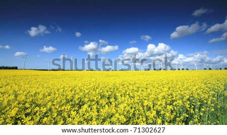 Wind farm on the rapeseed field - stock photo
