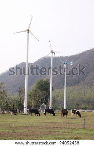 Wind mills in dairy farm