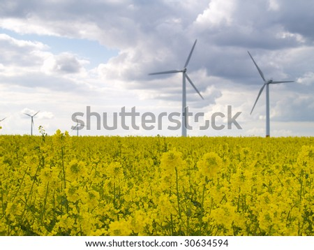 wind power plants in canola field with dark clouds, focus on nearest blossoms