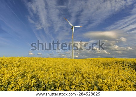 Wind power station in field with rape oil seed plants, Poland
