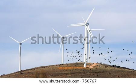 wind turbines and birds - stock photo