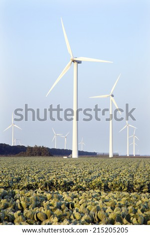 wind turbines and green cabbage field in the province Flevoland in the Netherlands - stock photo