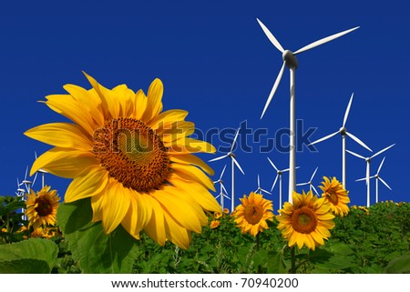 Wind turbines behind a field of sunflowers - stock photo