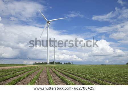 Wind turbines in a soybean field on a sunny afternoon with blue sky and clouds