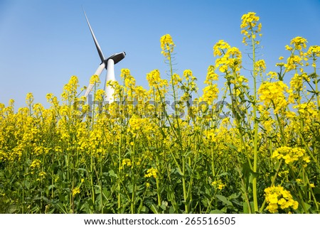 wind turbines in rapeseed field against a clear sky, clean energy concept - stock photo