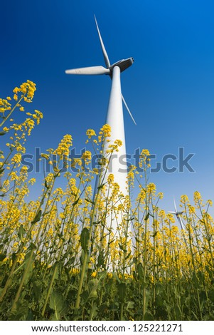 wind turbines in rapeseed field with a clear sky - stock photo