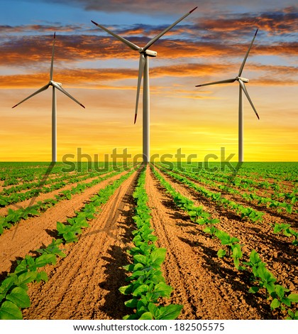 Wind turbines on field with green sunflowers in the sunset - stock photo