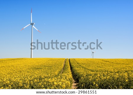 wind turbines standing in a field of yellow rapeseed