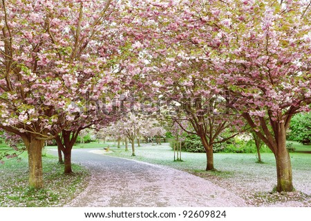 Winding Cherry Blossom Lined Pathway in a Beautiful Landscape Garden - stock photo