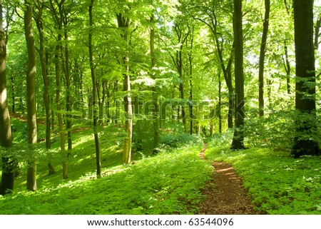 Winding footpath in a green forest - stock photo