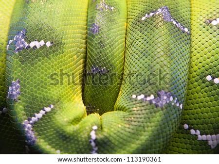 winding green skin of snake with white stripe - stock photo