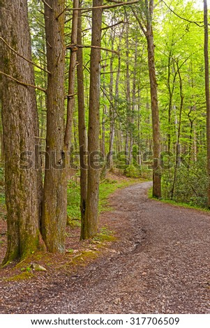 Winding path through the Forest in the Smoky Mountains in Tennessee - stock photo