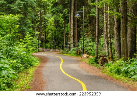 Winding Pathway in a Wood