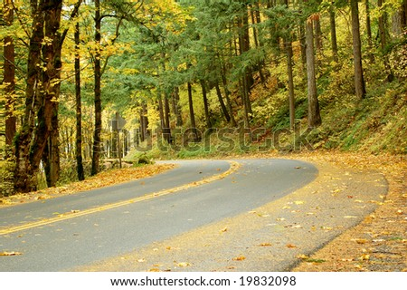 Winding Road in the Fall Forest