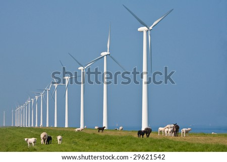 Windmill and sheep in the Netherlands - stock photo