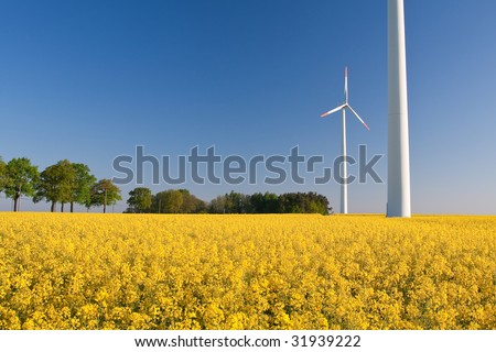 windmill  farm in the rapeseed field during springtime