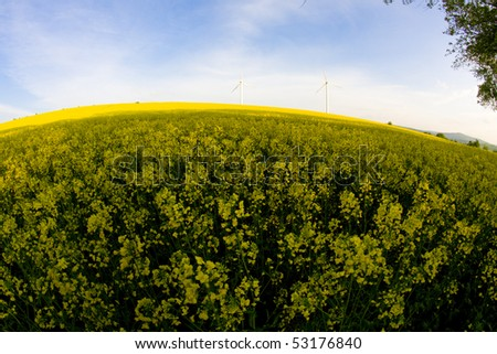 Windmill over rapeweed field in bloom fish eye look - stock photo