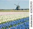 windmill with hyacinth field near Sint-Maartens-vlotbrug, Netherlands - stock photo