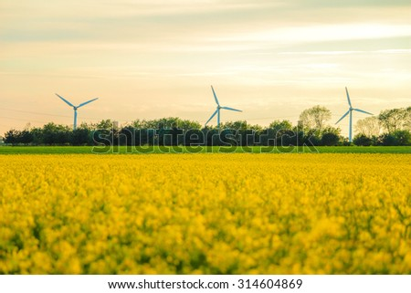 Windmills and rapeseed field. can be used for environment, windmills, energy, harvest, rape, industry and climate themes - stock photo