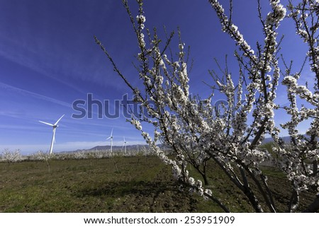 windmills with almonds trees,Andalusia, Spain - stock photo