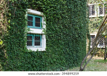 window building over by the creeping plant