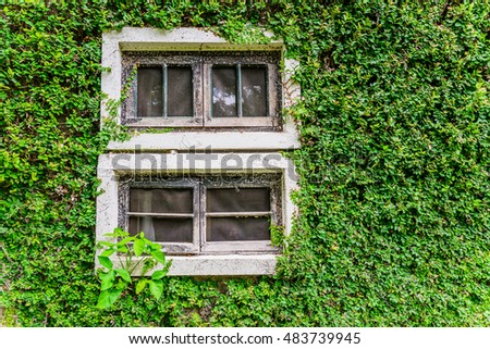 Window covered with green ivy background.