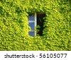 Window hidden in green ivy. - stock photo