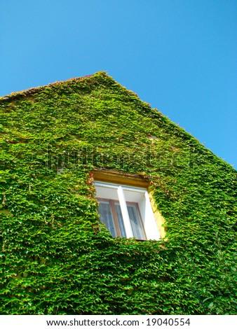 window, ivy - stock photo