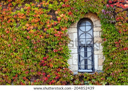 window on the old stone wall with orange and green leaves   - stock photo