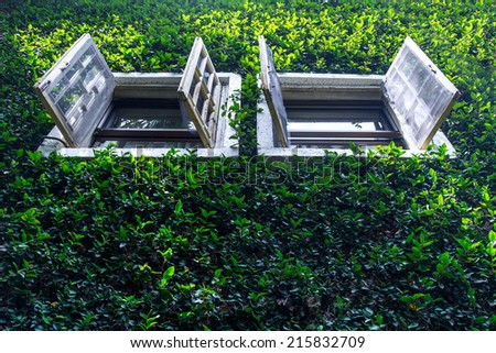 Window on wall ivy plant  - stock photo