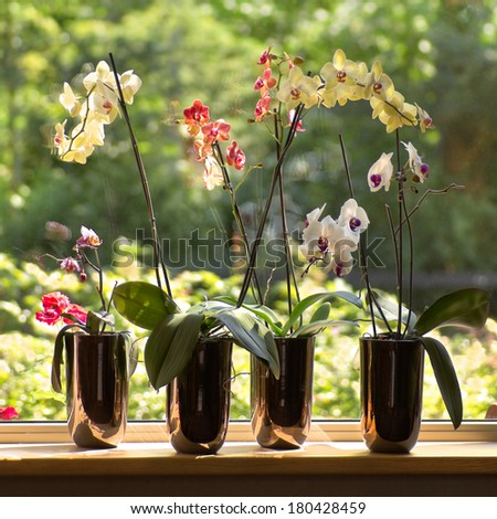 Window-sill and plant pots with Moth Orchids or Phalaenopsis with glassreflections and trees in background outdoors - square  - stock photo