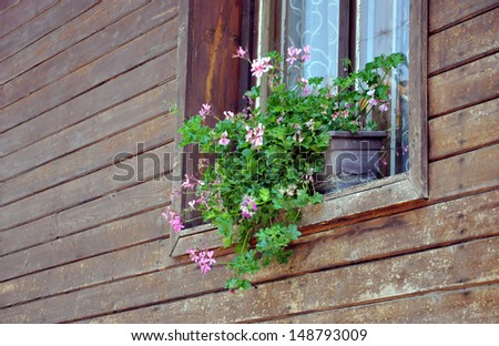 window with a pot of flowers on it