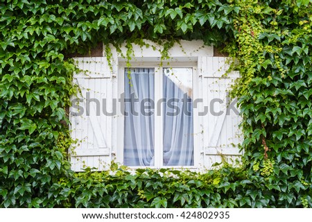 Window with creeping ivy tree - stock photo